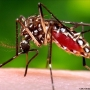 Kern County Department of Public Health Services: Protect yourself from mosquito bites