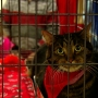 My Furry Valentine adoption event held at Sharonville Convention Center